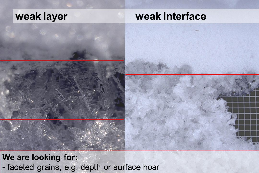 weak layer weak interface We are looking for: - faceted grains, e.g. depth or surface hoar