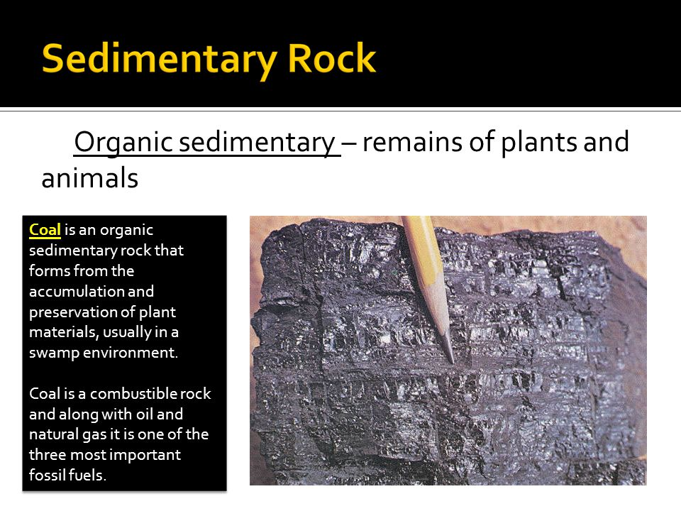 Organic sedimentary – remains of plants and animals Coal is an organic sedimentary rock that forms from the accumulation and preservation of plant materials, usually in a swamp environment.