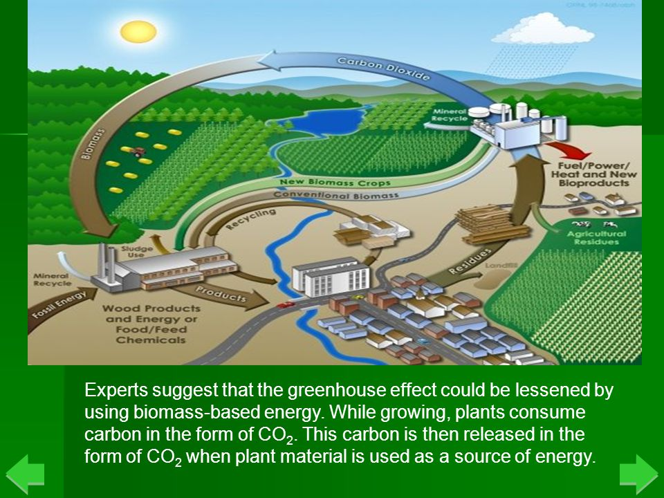 Biomass Carbon Cycle Experts suggest that the greenhouse effect could be lessened by using biomass-based energy.