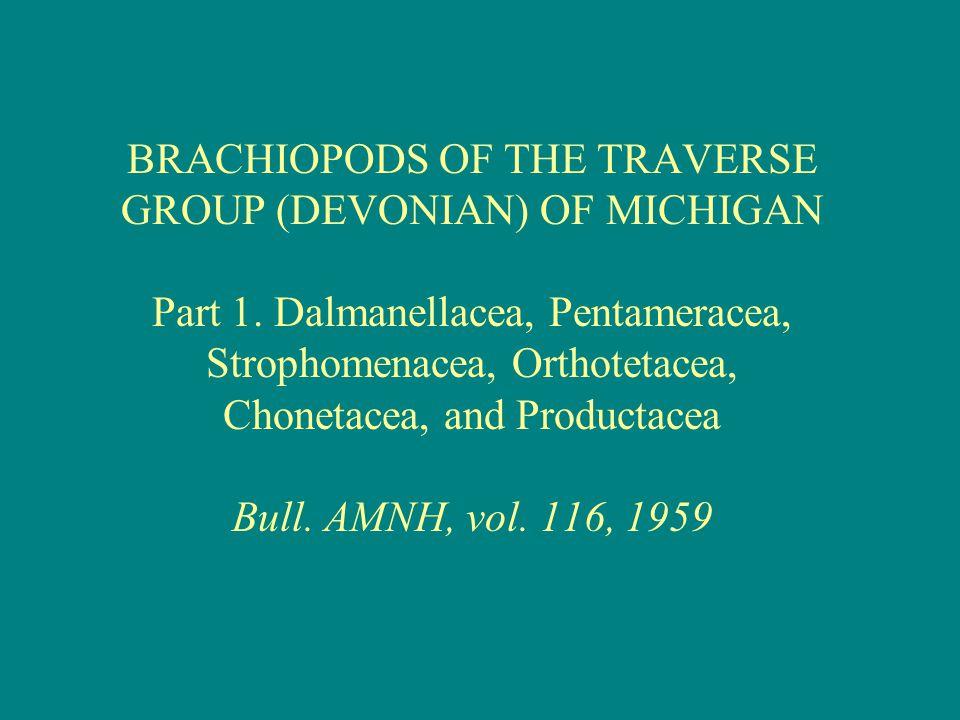 BRACHIOPODS OF THE TRAVERSE GROUP (DEVONIAN) OF MICHIGAN Part 1. Dalmanellacea, Pentameracea, Strophomenacea, Orthotetacea, Chonetacea, and Productace