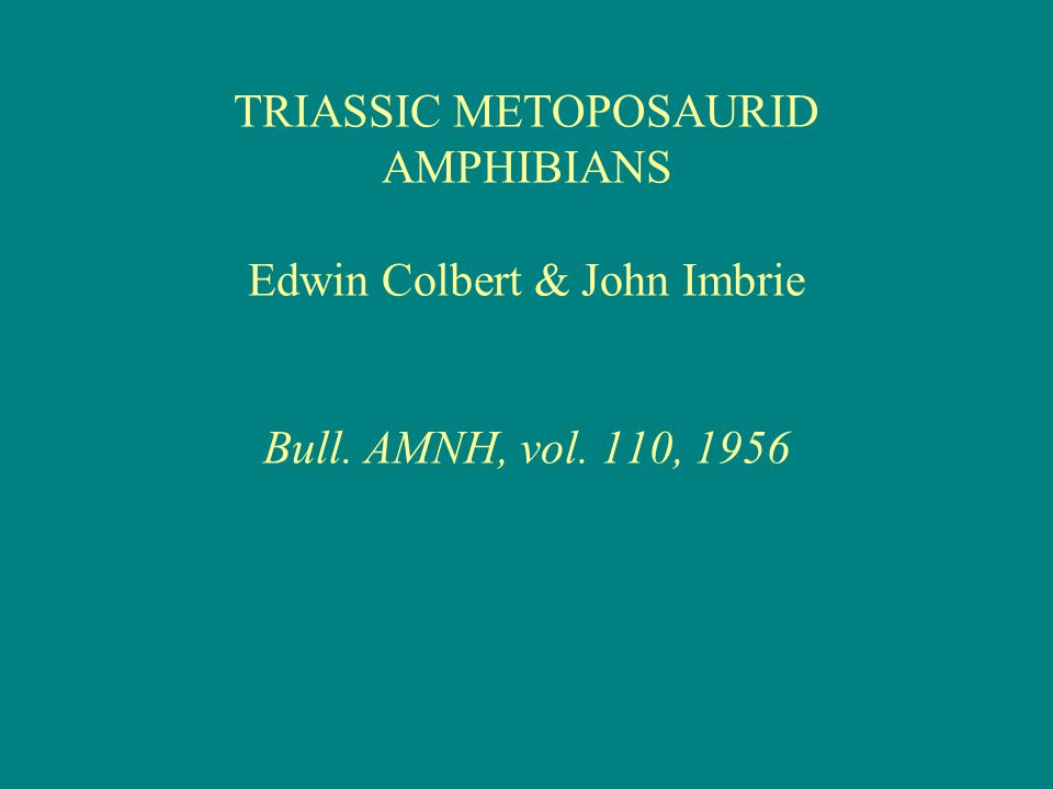 TRIASSIC METOPOSAURID AMPHIBIANS Edwin Colbert & John Imbrie Bull. AMNH, vol. 110, 1956
