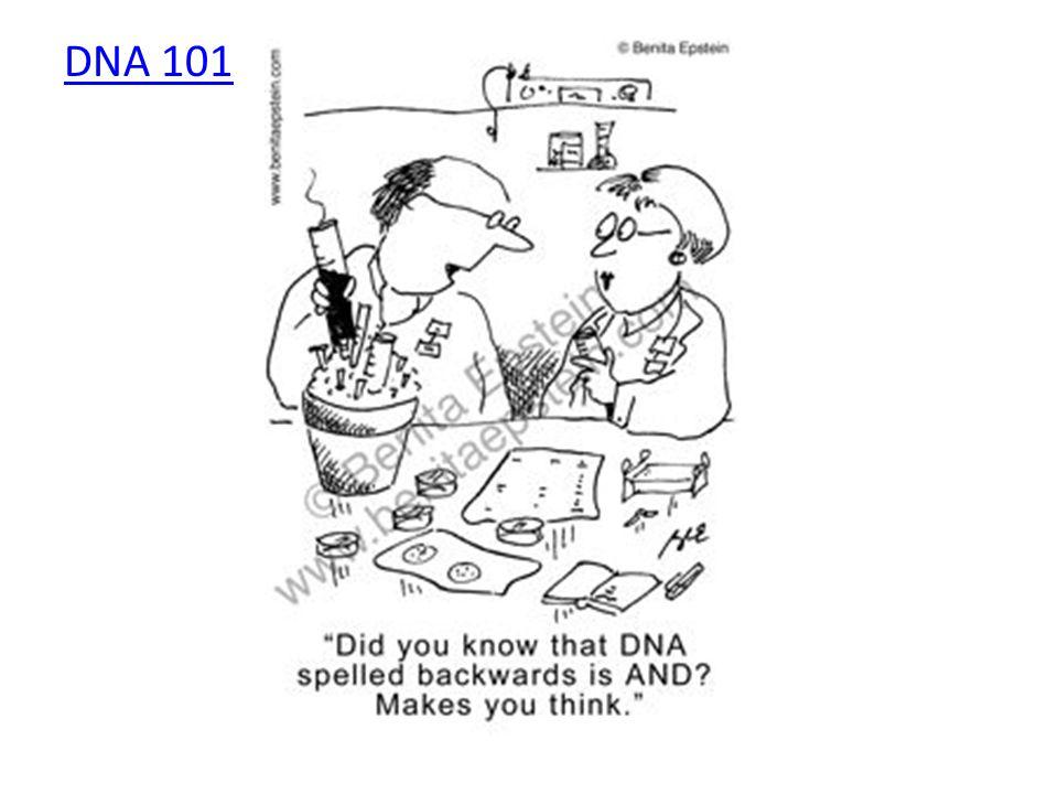 DNA 101