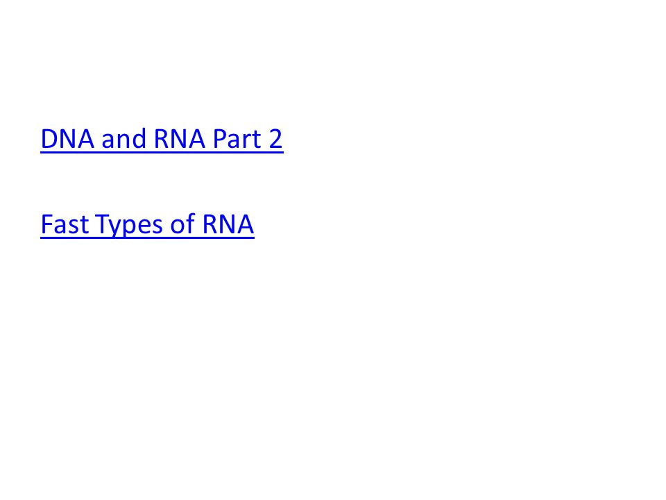 DNA and RNA Part 2 Fast Types of RNA