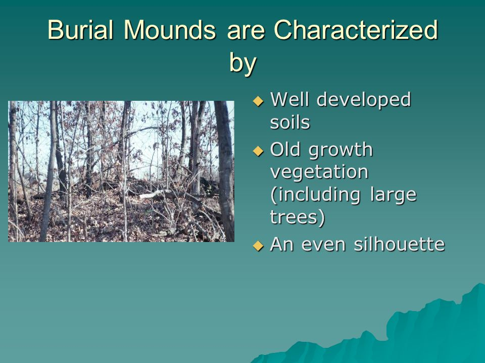 Burial Mounds are Characterized by  Well developed soils  Old growth vegetation (including large trees)  An even silhouette