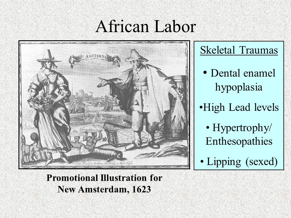 African Labor Promotional Illustration for New Amsterdam, 1623 Skeletal Traumas Dental enamel hypoplasia High Lead levels Hypertrophy/ Enthesopathies