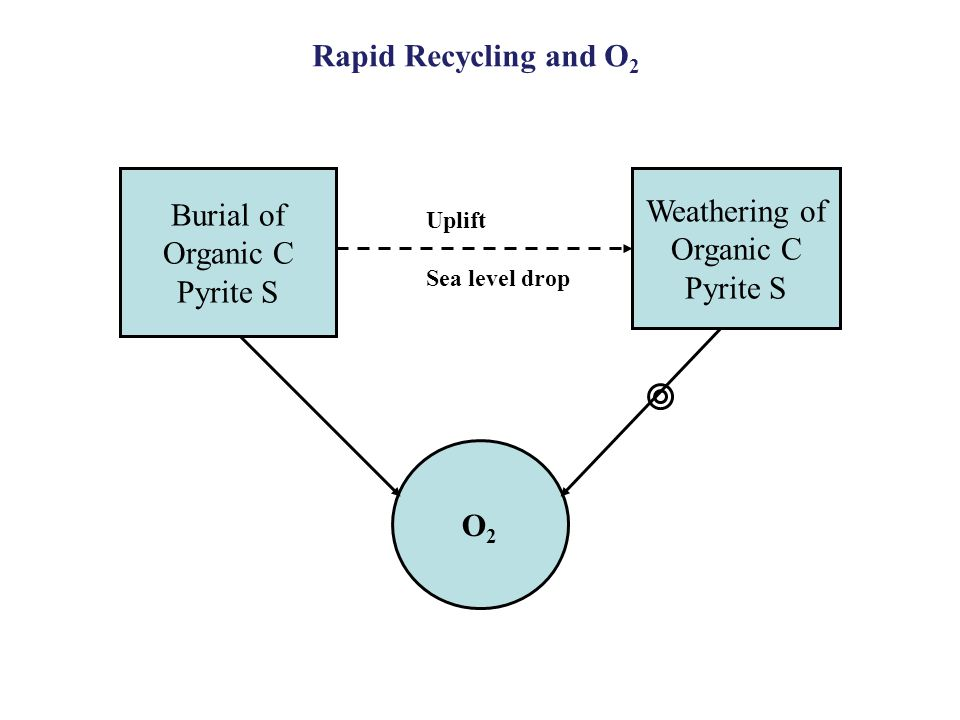 O2O2 Burial of Organic C Pyrite S Weathering of Organic C Pyrite S Uplift Sea level drop Rapid Recycling and O 2