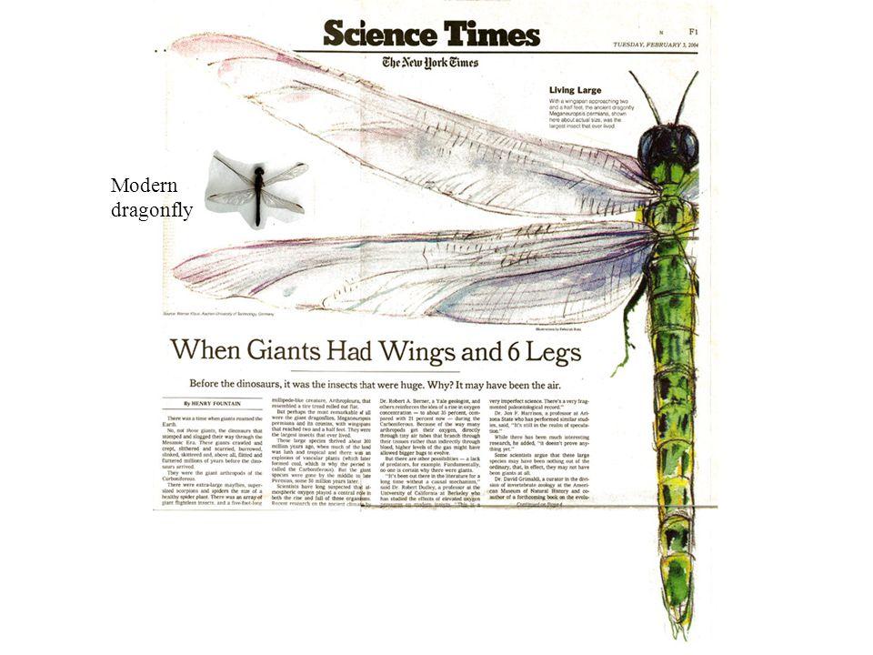 Modern dragonfly