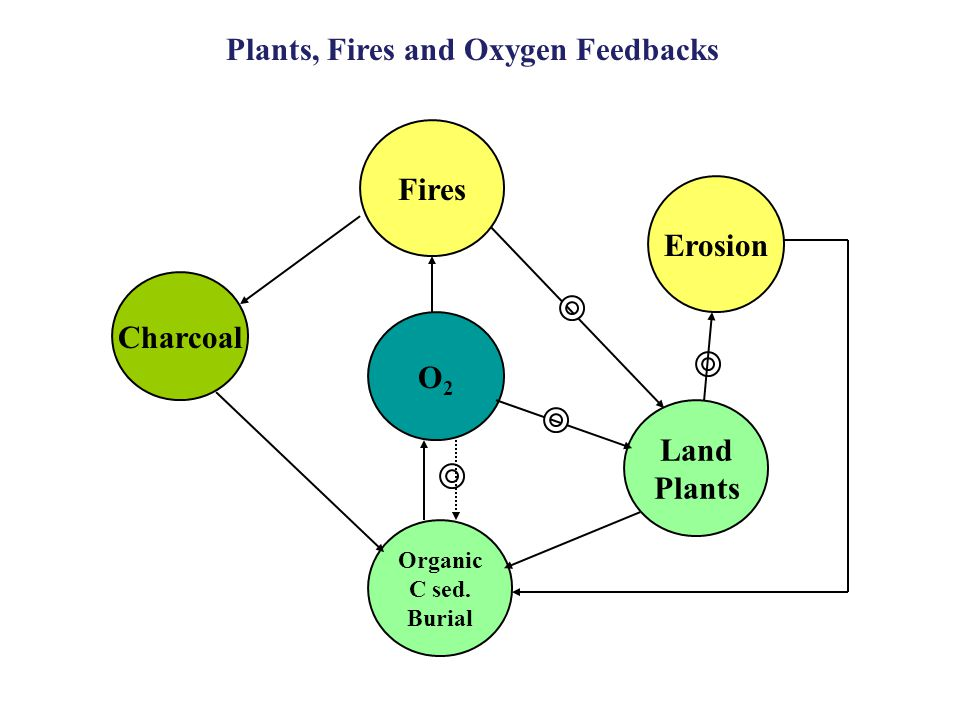 Land Plants Organic C sed. Burial O2O2 Plants, Fires and Oxygen Feedbacks Charcoal Fires Erosion