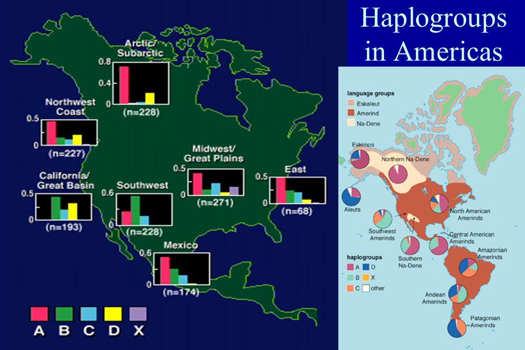 11 Haplogroups in Americas