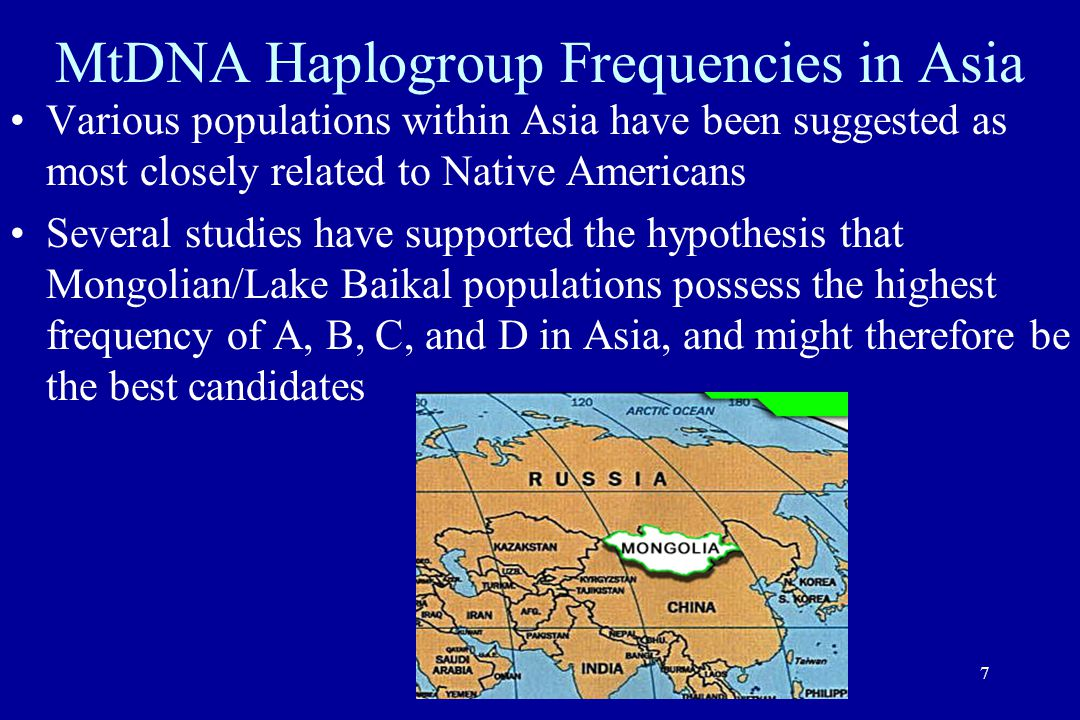 7 MtDNA Haplogroup Frequencies in Asia Various populations within Asia have been suggested as most closely related to Native Americans Several studies