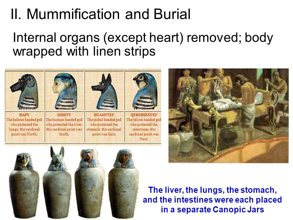 II. Mummification and Burial Internal organs (except heart) removed; body wrapped with linen strips The liver, the lungs, the stomach, and the intesti