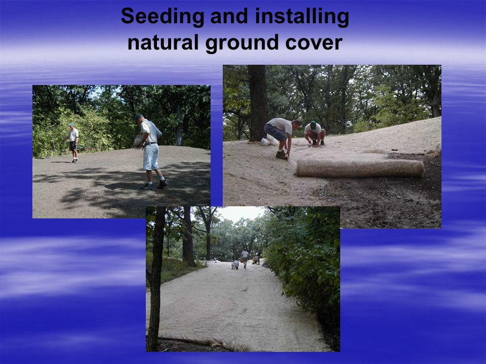 Seeding and installing natural ground cover