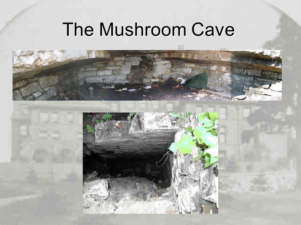 The Mushroom Cave