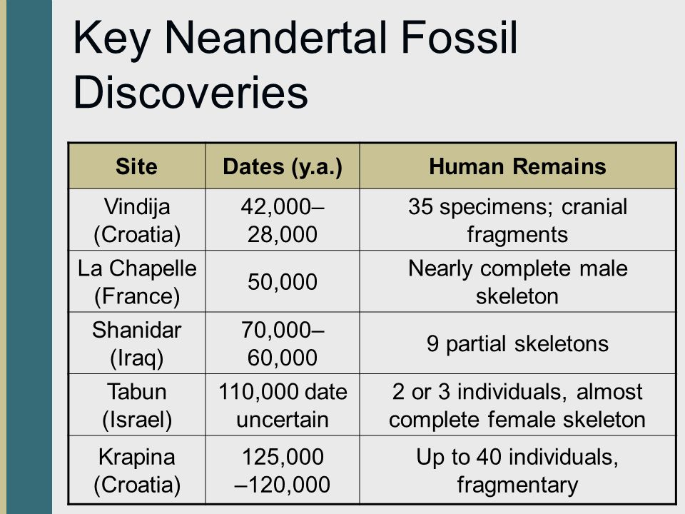 Key Neandertal Fossil Discoveries SiteDates (y.a.)Human Remains Vindija (Croatia) 42,000– 28,000 35 specimens; cranial fragments La Chapelle (France) 50,000 Nearly complete male skeleton Shanidar (Iraq) 70,000– 60,000 9 partial skeletons Tabun (Israel) 110,000 date uncertain 2 or 3 individuals, almost complete female skeleton Krapina (Croatia) 125,000 –120,000 Up to 40 individuals, fragmentary