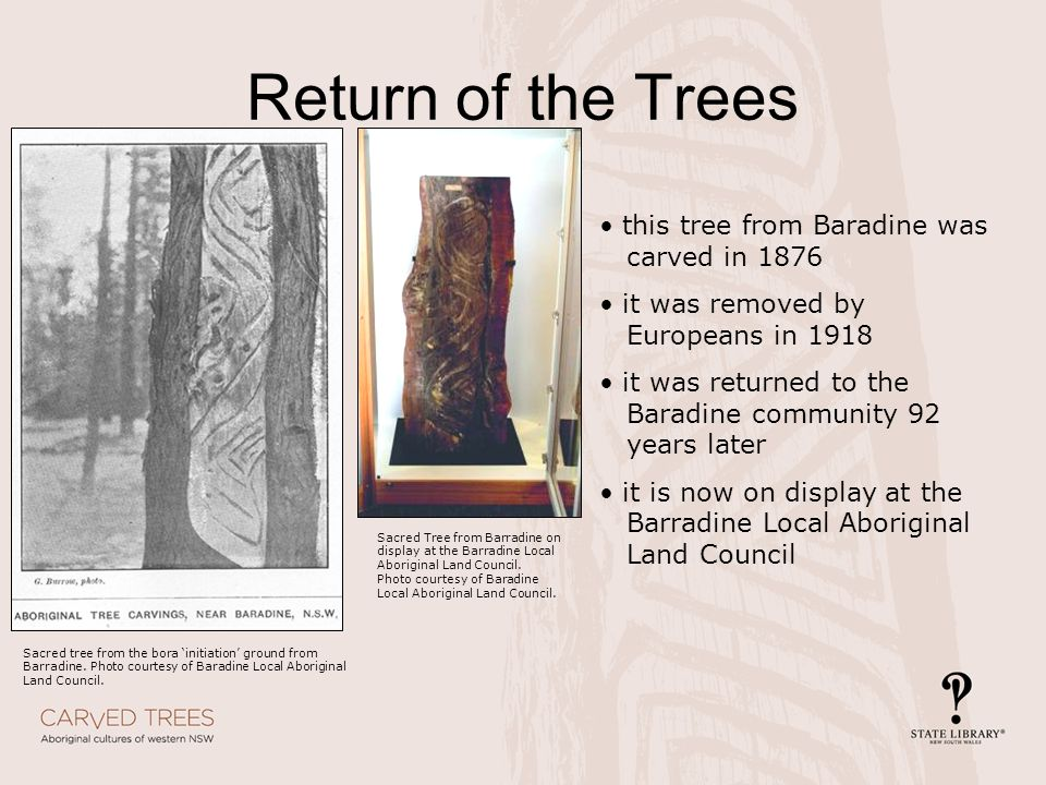 Return of the Trees this tree from Baradine was carved in 1876 it was removed by Europeans in 1918 it was returned to the Baradine community 92 years later it is now on display at the Barradine Local Aboriginal Land Council Sacred tree from the bora 'initiation' ground from Barradine.