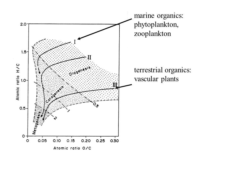 terrestrial organics: vascular plants marine organics: phytoplankton, zooplankton
