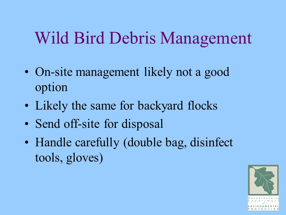 Wild Bird Debris Management On-site management likely not a good option Likely the same for backyard flocks Send off-site for disposal Handle carefully (double bag, disinfect tools, gloves)