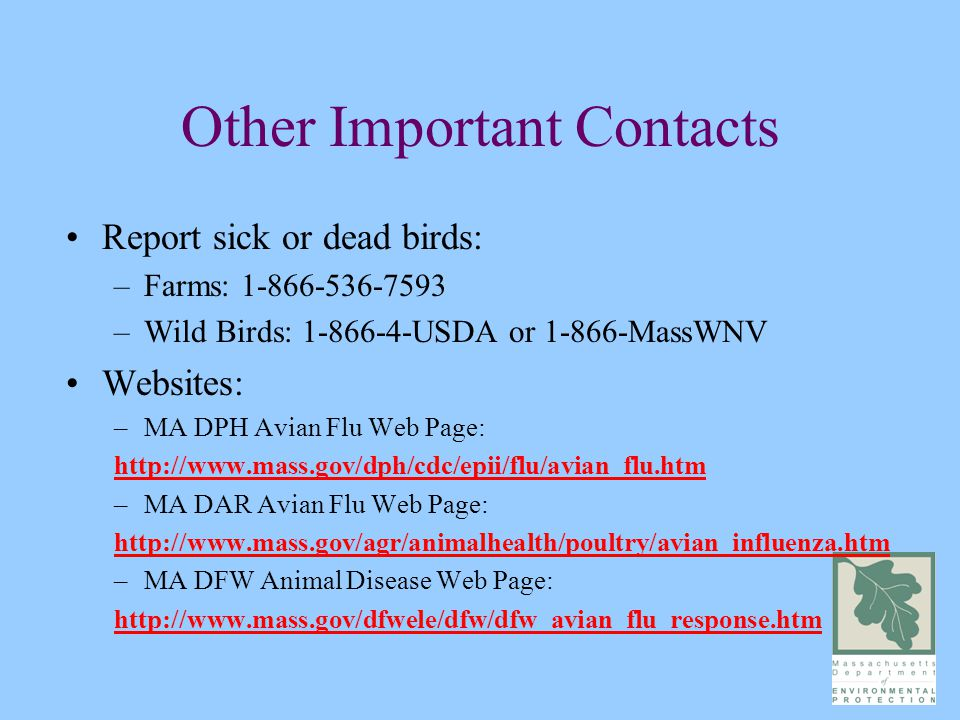 Other Important Contacts Report sick or dead birds: –Farms: 1-866-536-7593 –Wild Birds: 1-866-4-USDA or 1-866-MassWNV Websites: –MA DPH Avian Flu Web Page: http://www.mass.gov/dph/cdc/epii/flu/avian_flu.htm –MA DAR Avian Flu Web Page: http://www.mass.gov/agr/animalhealth/poultry/avian_influenza.htm –MA DFW Animal Disease Web Page: http://www.mass.gov/dfwele/dfw/dfw_avian_flu_response.htm