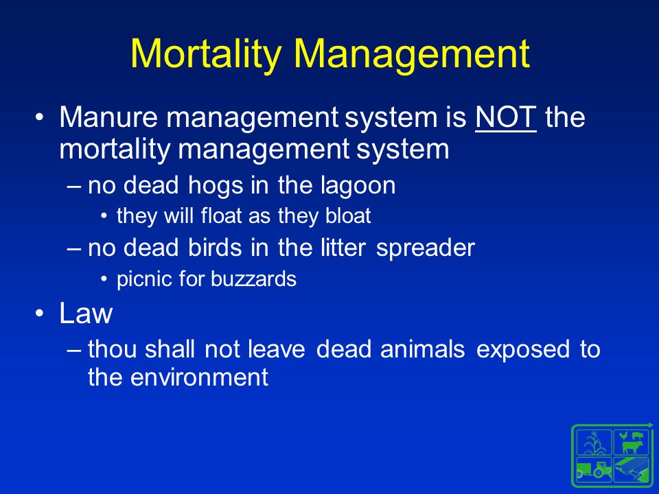 Mortality Management Manure management system is NOT the mortality management system –no dead hogs in the lagoon they will float as they bloat –no dead birds in the litter spreader picnic for buzzards Law –thou shall not leave dead animals exposed to the environment