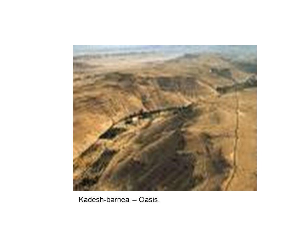 Kadesh-barnea – Oasis.