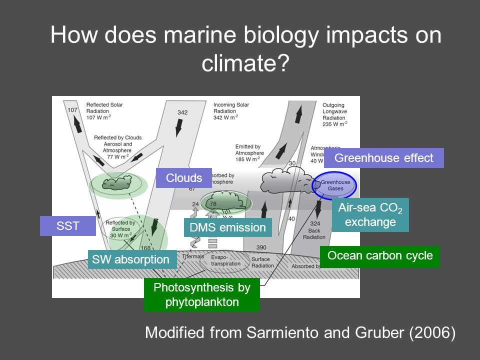 Observed biological response Chlorophyll responds to SAM (Lovenduski and Gruber 2005) Antarctic region - Chl increases with SAM index Subantarctic region -Chl decreases with SAM index Regression of SeaWIFS chlorophyll anomaly onto SAM index (1997-2004) Mechanisms.