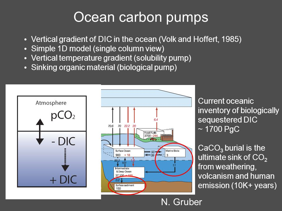 Carbon flux trends driven by SAM Positive trend in SAM leads to increased upwelling of deep waters enriched in DIC –Outgassing of natural CO 2 Atmospheric inversion (1981-2004) (Le Quéré et al.