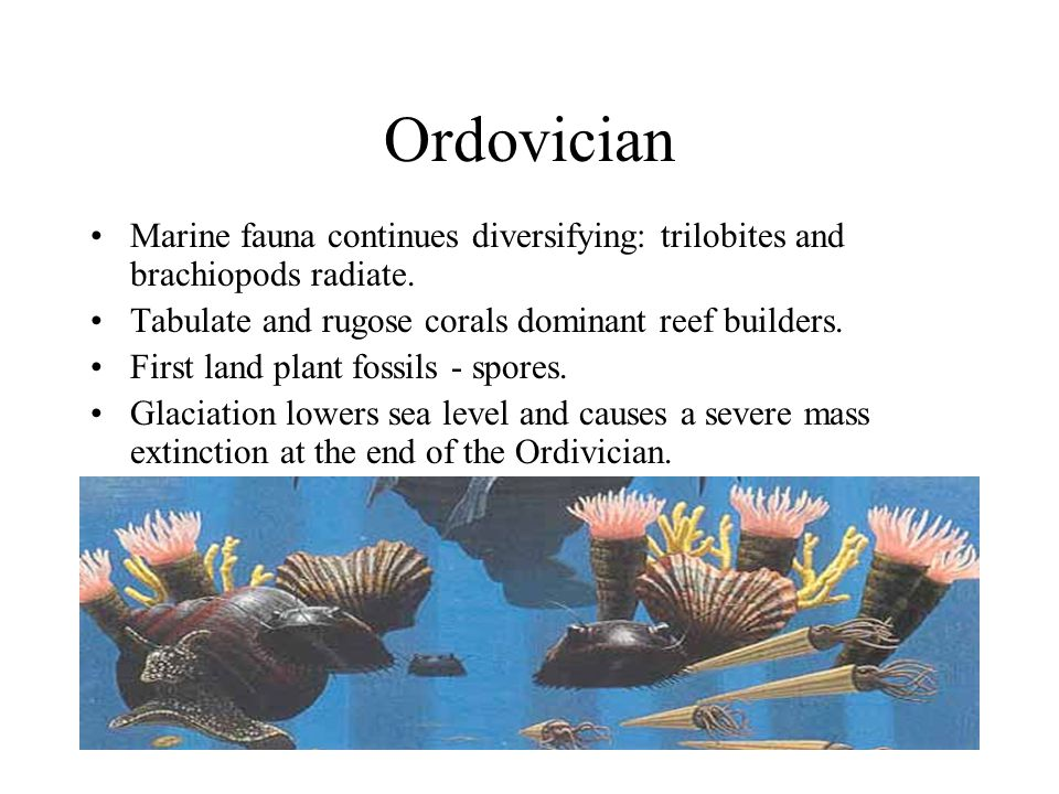 Ordovician Marine fauna continues diversifying: trilobites and brachiopods radiate. Tabulate and rugose corals dominant reef builders. First land plan