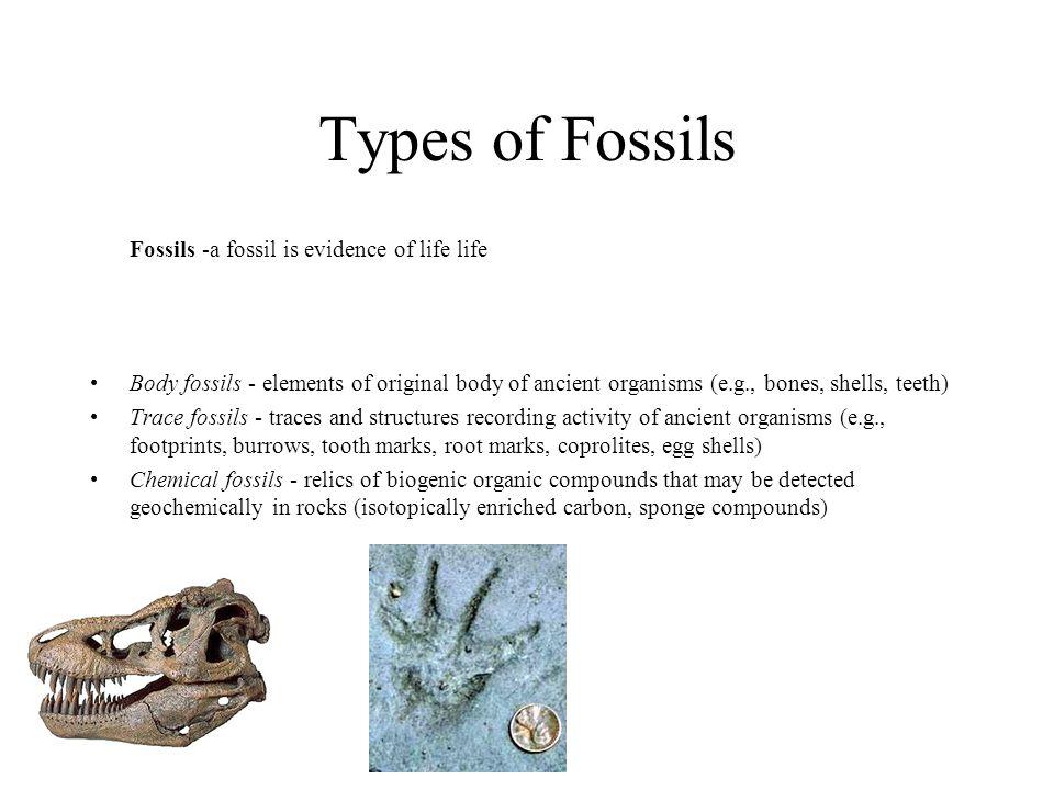 Cretaceous Faunas become increasingly provicial.