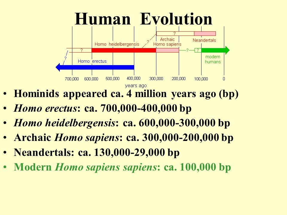 Early Archaic Homo Sapiens  Blurry dividing line between Homo erectus and Homo sapiens  Evolutionary changes extended over several hundred thousand