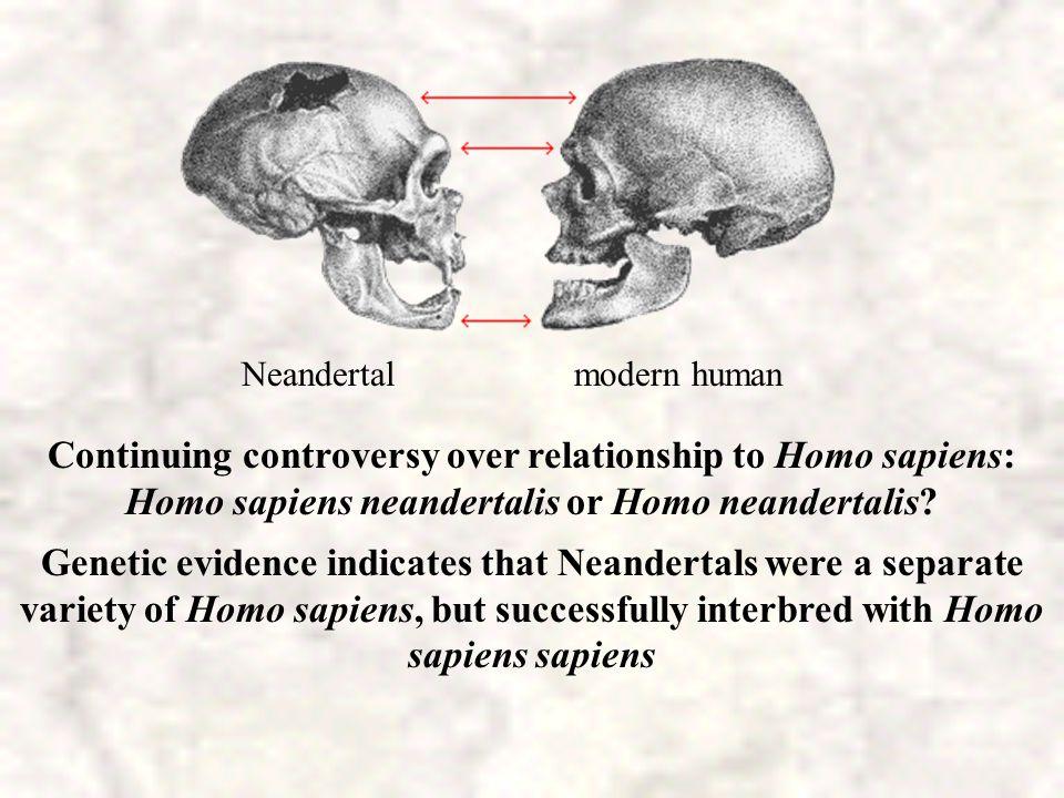NEANDERTAL Figures modeled from skulls and skeletons Israel France