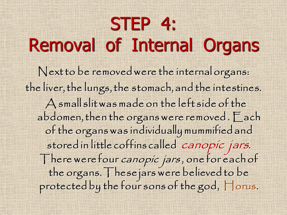 STEP 4: Removal of Internal Organs Next to be removed were the internal organs: the liver, the lungs, the stomach, and the intestines. A small slit wa
