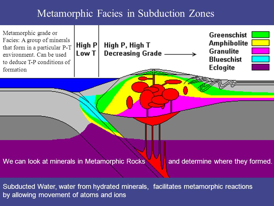 Metamorphic Facies in Subduction Zones We can look at minerals in Metamorphic Rocks and determine where they formed. Subducted Water, water from hydra