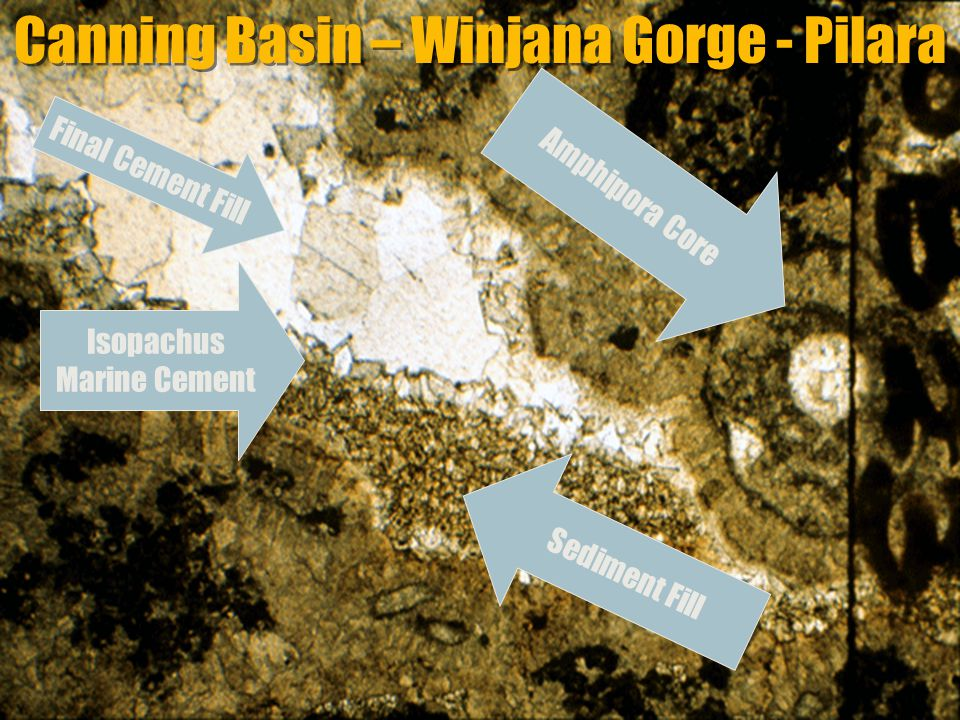 GEOL 751 Lecture 6: Cementation & Diagnesis Canning Basin – Winjana Gorge - Pilara Sediment Fill Final Cement Fill Isopachus Marine Cement Amphipora C