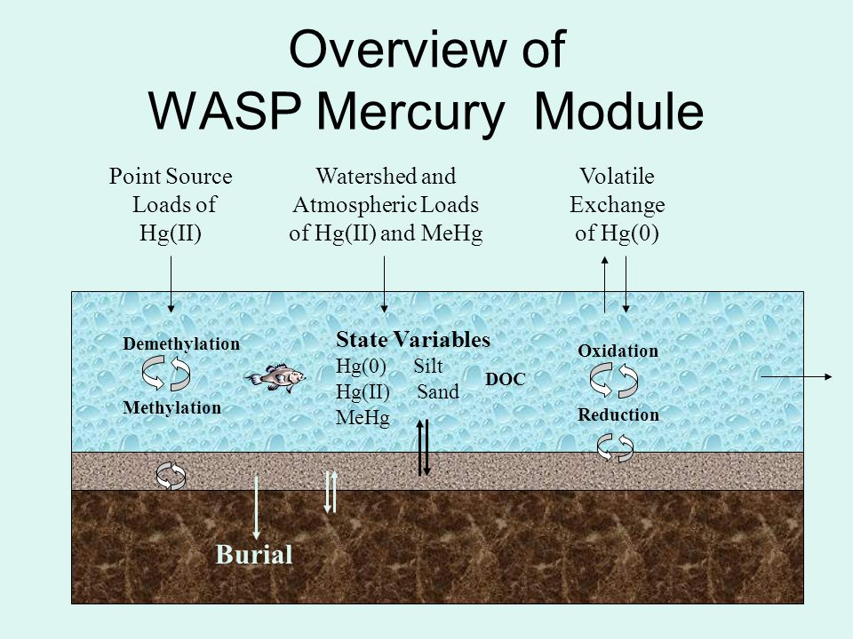 Overview of WASP Mercury Module Volatile Exchange of Hg(0) Watershed and Atmospheric Loads of Hg(II) and MeHg State Variables Hg(0) Silt Hg(II) Sand M