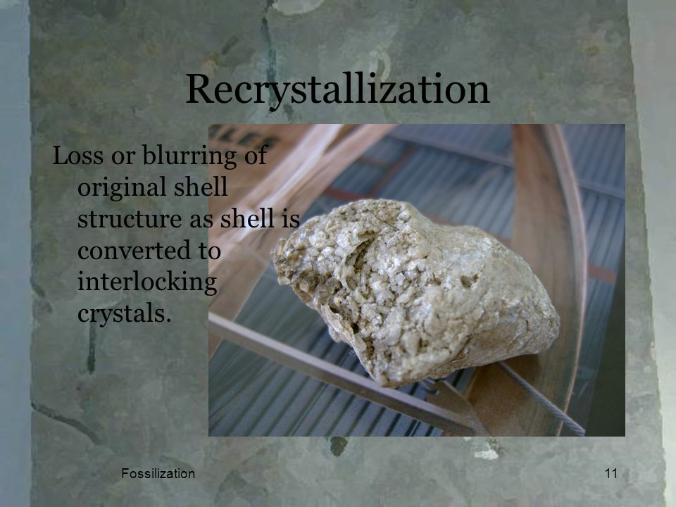 Fossilization11 Recrystallization Loss or blurring of original shell structure as shell is converted to interlocking crystals.