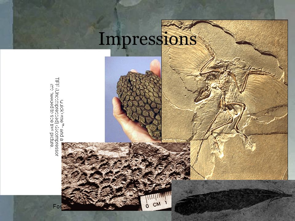 Fossilization13 2-dimensional imprints without any organic material Impressions