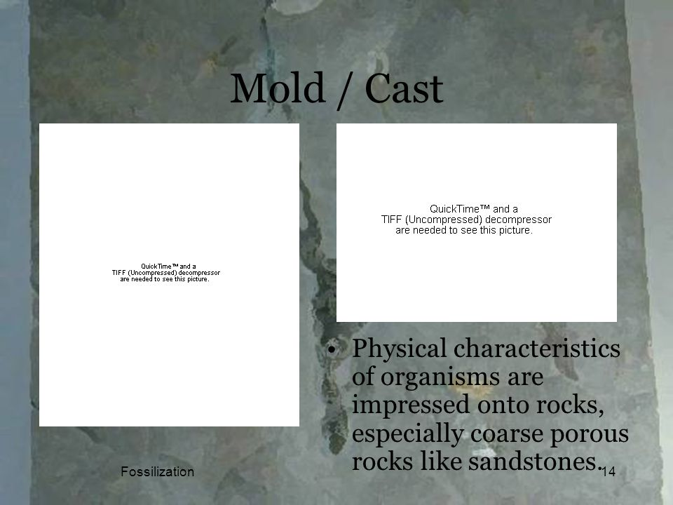 Fossilization14 Mold / Cast Physical characteristics of organisms are impressed onto rocks, especially coarse porous rocks like sandstones.