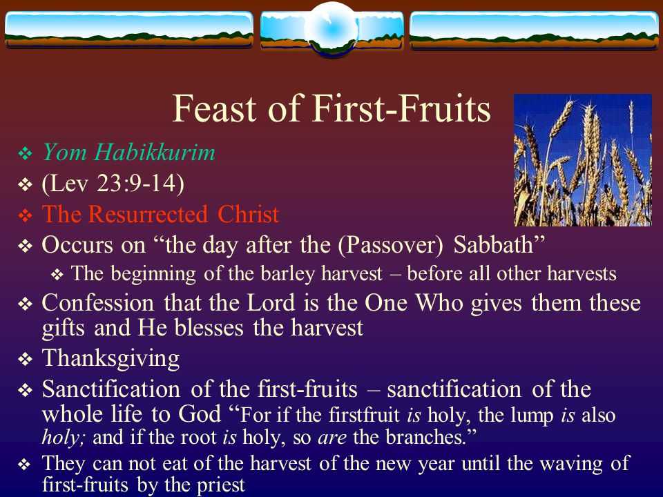 Feast of First-Fruits  Yom Habikkurim  (Lev 23:9-14)  The Resurrected Christ  Occurs on the day after the (Passover) Sabbath  The beginning of the barley harvest – before all other harvests  Confession that the Lord is the One Who gives them these gifts and He blesses the harvest  Thanksgiving  Sanctification of the first-fruits – sanctification of the whole life to God For if the firstfruit is holy, the lump is also holy; and if the root is holy, so are the branches.  They can not eat of the harvest of the new year until the waving of first-fruits by the priest