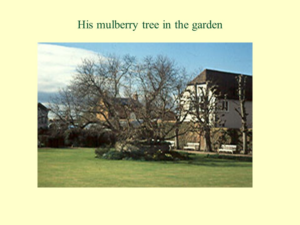 His mulberry tree in the garden