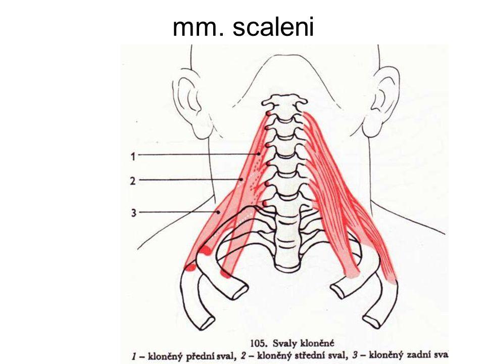 Gemütlich Scaleni Zeitgenössisch - Anatomie Ideen - finotti.info