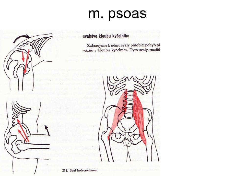 m. psoas