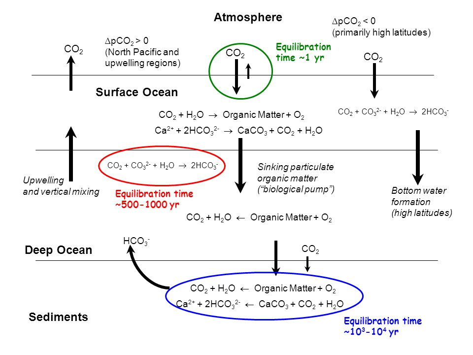 Atmosphere Surface Ocean Deep Ocean Sediments CO 2 CO 2 + H 2 O  Organic Matter + O 2 Ca 2+ + 2HCO 3 2-  CaCO 3 + CO 2 + H 2 O ∆pCO 2 > 0 (North Pacific and upwelling regions) ∆pCO 2 < 0 (primarily high latitudes) CO 2 + CO 3 2- + H 2 O  2HCO 3 - Upwelling and vertical mixing Sinking particulate organic matter ( biological pump ) CO 2 + H 2 O  Organic Matter + O 2 CO 2 + CO 3 2- + H 2 O  2HCO 3 - CO 2 + H 2 O  Organic Matter + O 2 Ca 2+ + 2HCO 3 2-  CaCO 3 + CO 2 + H 2 O CO 2 HCO 3 - Bottom water formation (high latitudes) Equilibration time ~1 yr Equilibration time ~500-1000 yr Equilibration time ~10 3 -10 4 yr