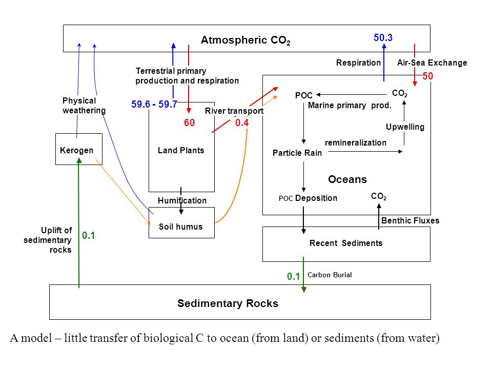 Atmospheric CO 2 KerogenLand Plants Soil humus Humification Sedimentary Rocks Uplift of sedimentary rocks Particle Rain Oceans Recent Sediments POC POC Deposition Carbon Burial CO 2 Marine primary prod.