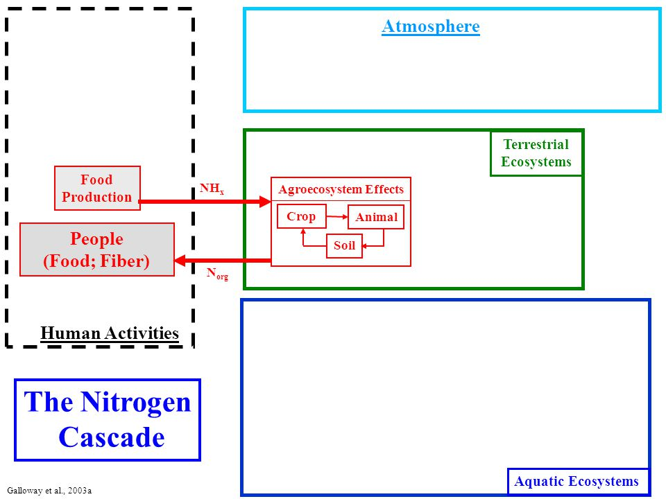 Atmosphere Terrestrial Ecosystems Aquatic Ecosystems Human Activities Agroecosystem Effects NH x Food Production Crop Animal People (Food; Fiber) Soil The Nitrogen Cascade N org Galloway et al., 2003a