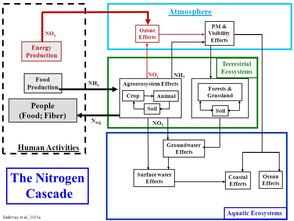 Atmosphere Terrestrial Ecosystems Aquatic Ecosystems Human Activities Groundwater Effects Surface water Effects Coastal Effects Energy Production PM & Visibility Effects Ozone Effects Agroecosystem Effects NH x Food Production NO x Crop Animal People (Food; Fiber) Soil NO 3 The Nitrogen Cascade NH 3 N org Forests & Grassland Soil Ocean Effects Galloway et al., 2003a