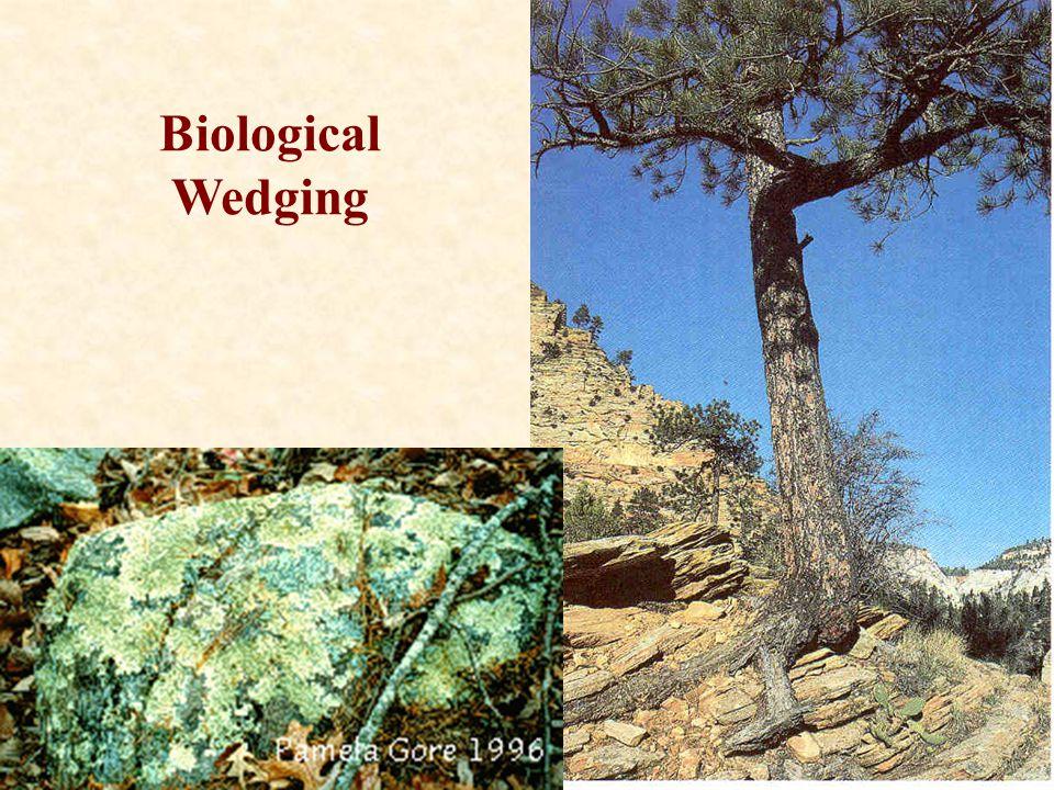 Biological Wedging