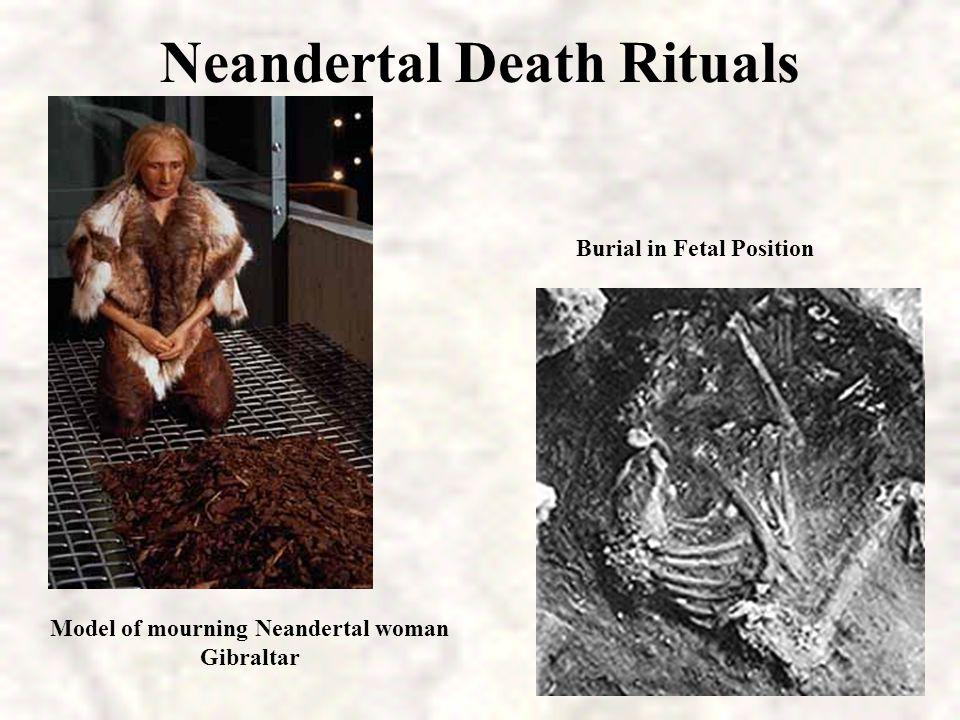 Neandertal modern human Continuing controversy over relationship to Homo sapiens: Homo sapiens neandertalis or Homo neandertalis.