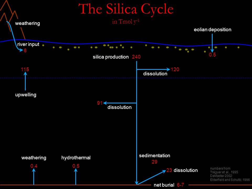 The Silica Cycle in Tmol y -1 6 weathering silica production240 dissolution river input 120 dissolution 91 upwelling 115 sedimentation 29 dissolution23 net burial6-7 weathering 0.4 hydrothermal 0.5 numbers from Tréguer et al., 1995 DeMaster 2002 Elderfield and Schultz, 1996 eolian deposition 0.5