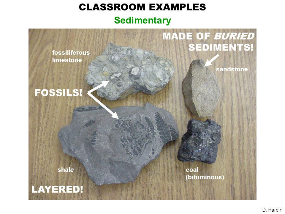 CLASSROOM EXAMPLES Sedimentary shale fossiliferous limestone sandstone coal (bituminous) D. Hardin MADE OF BURIED SEDIMENTS! FOSSILS! LAYERED!