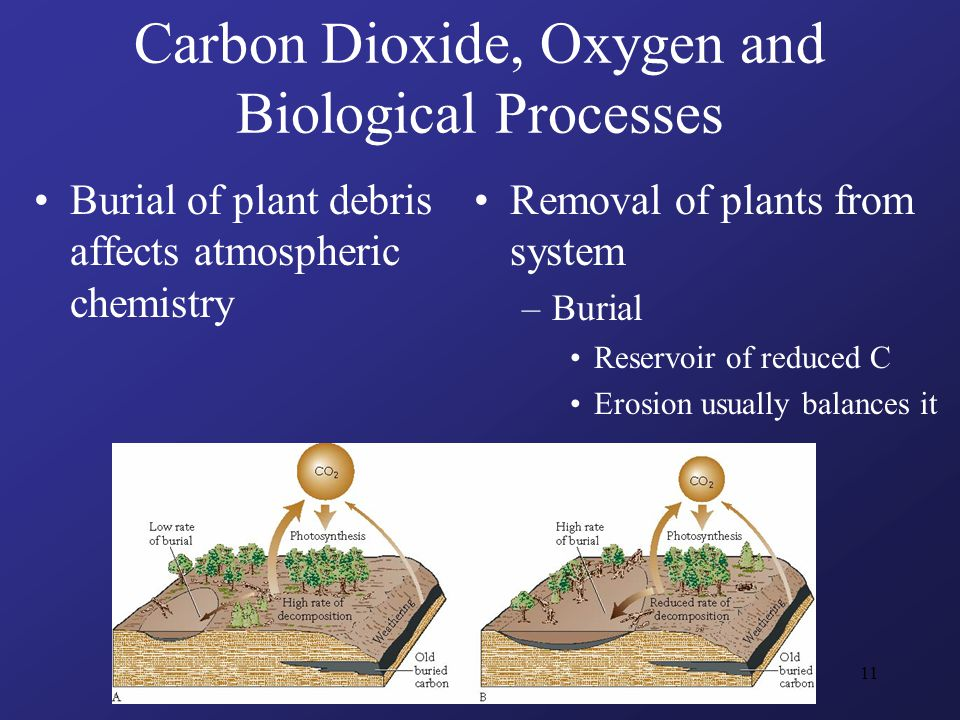 11 Carbon Dioxide, Oxygen and Biological Processes Burial of plant debris affects atmospheric chemistry Removal of plants from system –Burial Reservoir of reduced C Erosion usually balances it